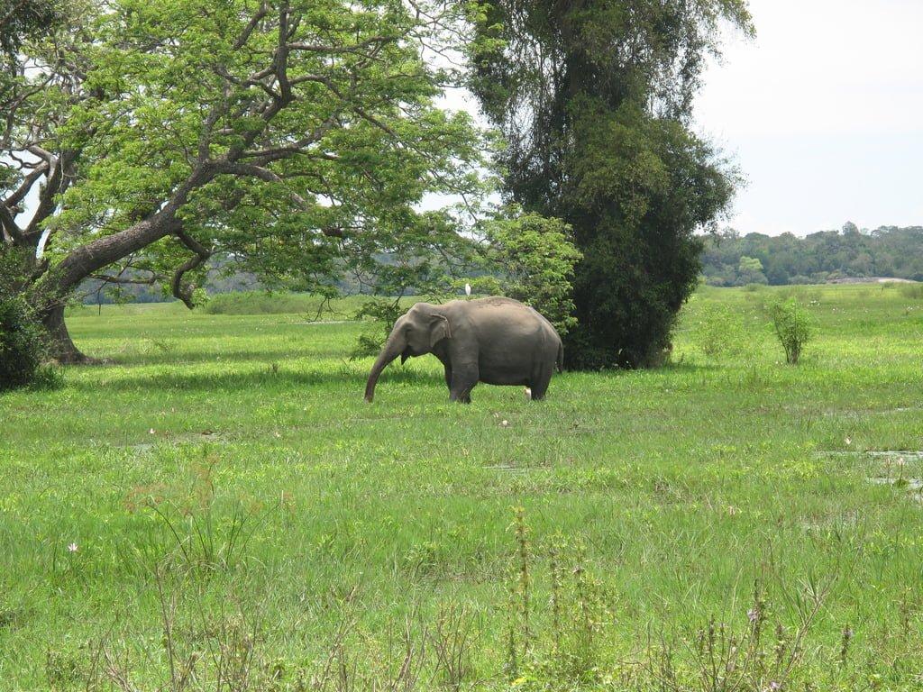 Vegetation and Arugum Bay elephant